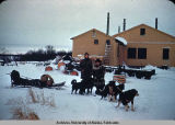 Napakiak bound, tired dogs, Jan. 1949.