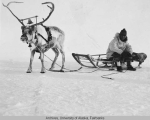 Reindeer hitched to sled.