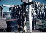 Drying fish, Mekoryuk.