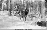 Dog sled on a trail.