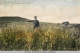 Ed Bartlett's oat field near Fairbanks, Alaska