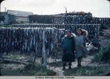 Fish Drying.