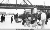 Sled dog team on Chena River in Fairbanks.