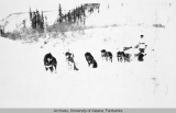 Five dog sled team with musher