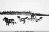 Four dog sled team with musher