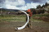 198-lb. Mammoth tusk at Ester Creek. #1147.