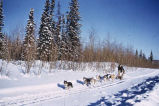 Gareth Wright, mushing. #1280. Copyright Griffin's, 552 2nd Ave., Fairbanks, Alaska.