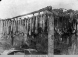 Salmon drying