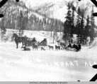 Three horse sleds and dog sled