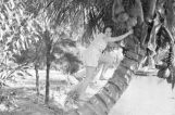 Lillian Crosson climbing a palm tree.
