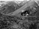 Karstens, Toklat horse and Silas with pack on edge of Cascade Cañon.