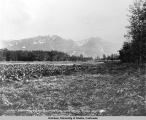 Vegetable Garden and Sawtooth Range at Hot Springs, Alaska.