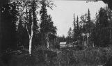 Matanuska, June 12, 1915. Native...