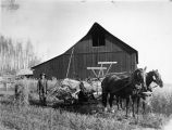 Fairbanks Station. Cutting increase plats of oats. Variety plats. Sept. 25, 1918.
