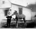 Little Benny feeding his colt with milk -- Skagway 1898
