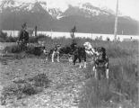 Dog team on Kenai Peninsula.