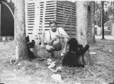 Man playing with two pet bear cubs.