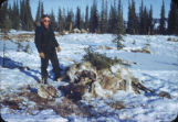 After a caribou kill and preparing the meat.