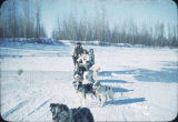 Malamute dog sled on Kobuk River up river from Shungnak.