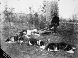 C.R. Stiltz and his husky dog team in the Klondike.