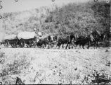 Horse-drawn wagons.