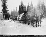 Logging teams on Twelve Mile, Y.T.