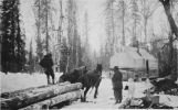 Horse team pulling logs.