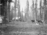 Portion of Road Commission camp near Copper Center. Valdez-Fairbanks wagon road.
