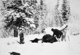 Snowshoer with dog and felled moose.