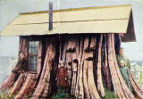 Cedar stump residence, Washington state.