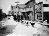 Sled dogs running by stores and businesses.