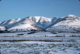Whaleback Mtns. Iditarod Tr. on way to Unalakleet.