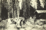 Team of dogs staked out in the dog yard in front of a cabin on the Upper Healy River, circa 1930s.
