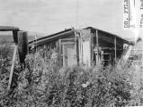 Former home of Rex Beach, novelist. Rampart - magenta fireweed in yard. 1934.