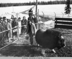 Delegates at the musk ox farm.
