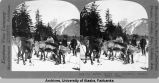 Dr. Sheldon Jackson and Government Reindeer, Haines, Alaska