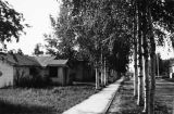 Fairbanks, September 1944. A nice wooded street in town.