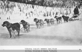 Tanana Valley Mission dog team