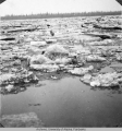 Ice running freely on Tanana River