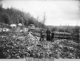 More turnips.