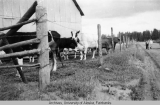 Creamer's Dairy-when it hosted cows instead of birds.