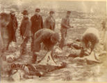 Skinning seals, St. George ID. (record 47 seconds.)