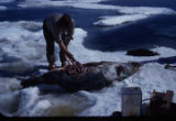 Man butchering seal.