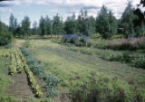 Garden at Williawaw [Williwaw] Lodge, July 1960.