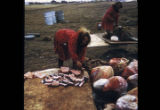 Women cutting muktuk.