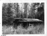 A cabin in the spruce.