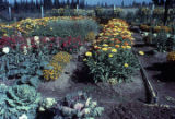 Anchorage flower garden.