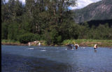Russian River Alaska, Combat Fishing.