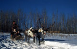 Reindeer racing, Fairbanks.