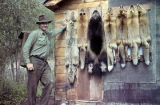 Trapper with red fox catch.